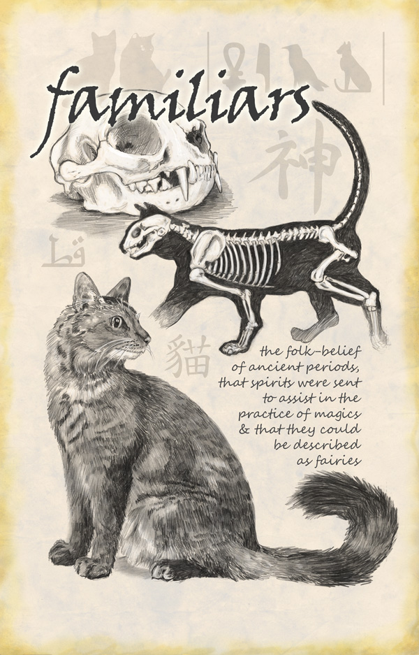 Familiars - the cat drawing